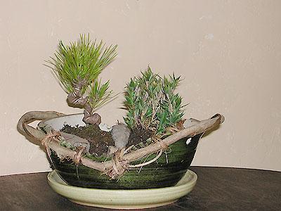 植木鉢(織部)の写真