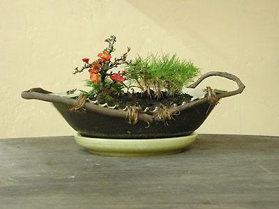 植木鉢(盆栽)竹松梅の写真